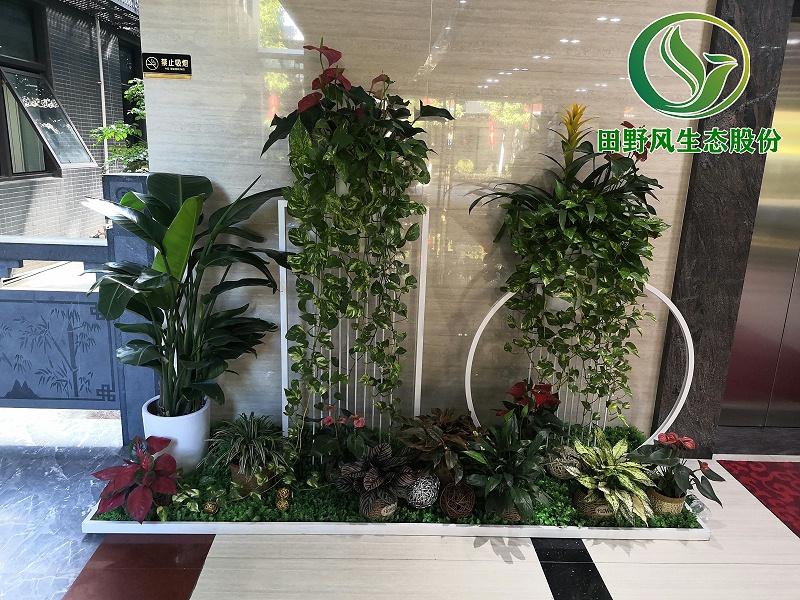 绿植租摆,绿植养护