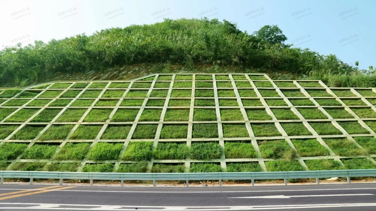 护坡绿化草种种植