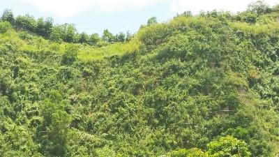 采石区生态种草工程