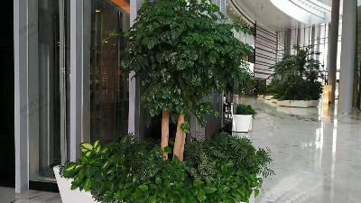 广州壬丰大厦植物租赁案例