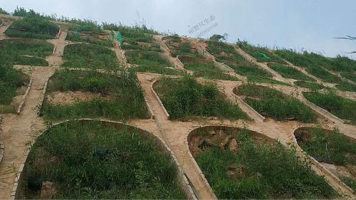 京珠高速韶关段公路边坡复绿工程