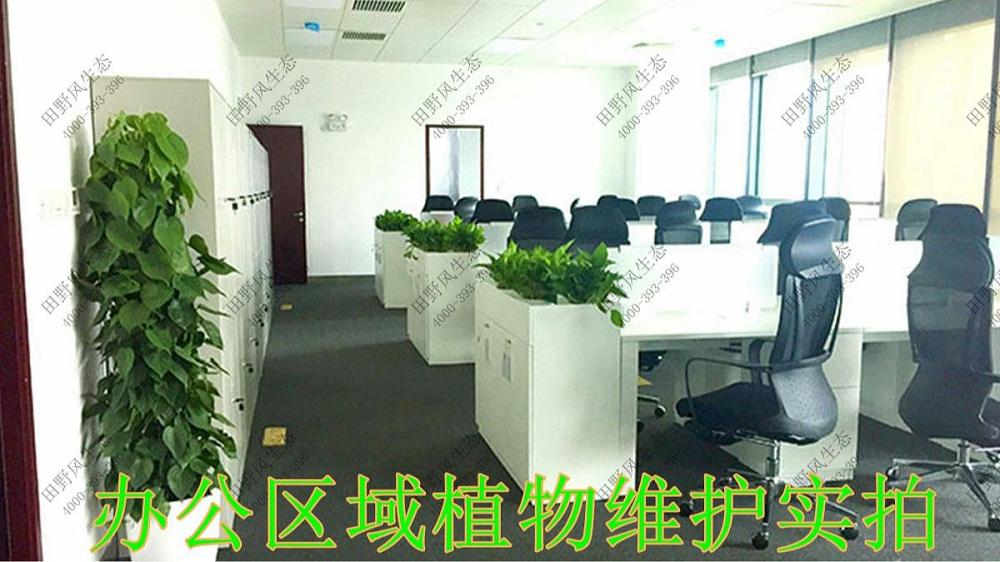 广东太平保险绿植租赁案例