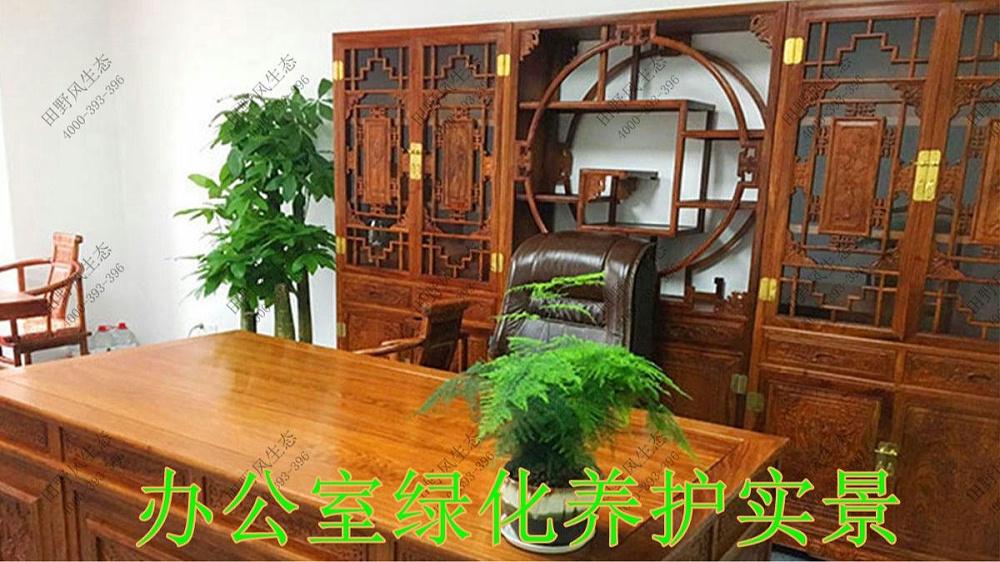 广东平安保险绿植租摆案例