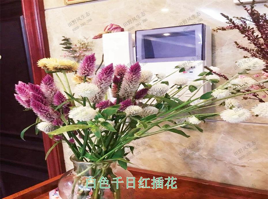 5白色千日红插花