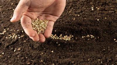 草种子播种后不盖土发芽会不会受影响?
