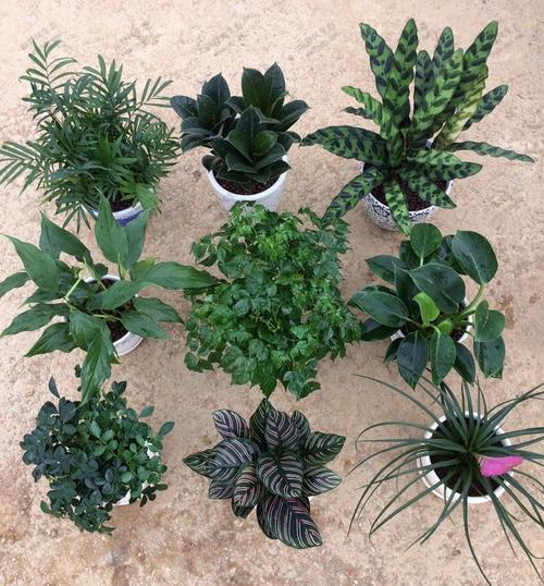 绿植租摆,植物租摆