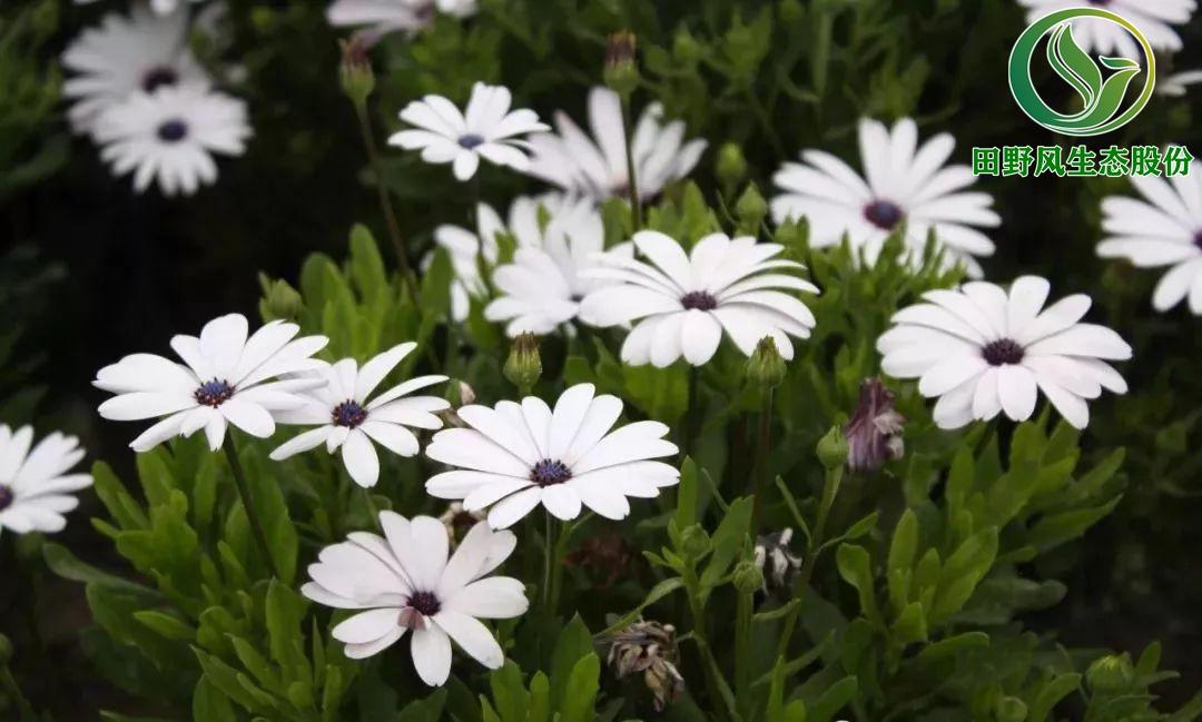 花卉种子,一年生花卉种子