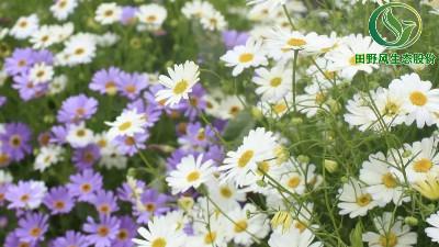 花卉种子的播种和养护管理