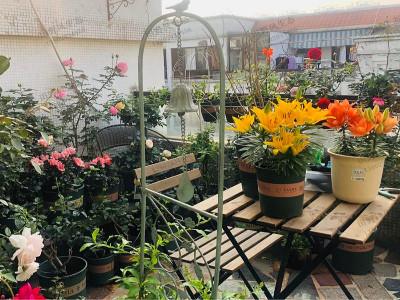 秋季阳台上应该种什么花种子?