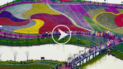 花海景观视频