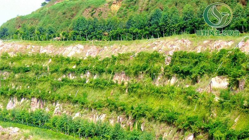 矿山生态修复