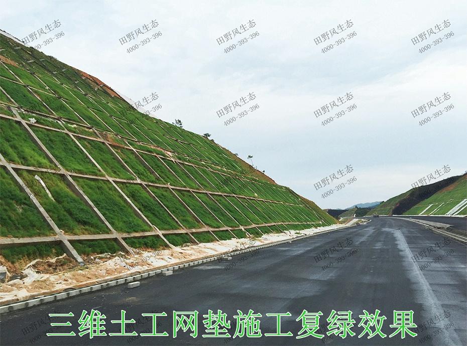 10三维土工网垫施工复绿效果