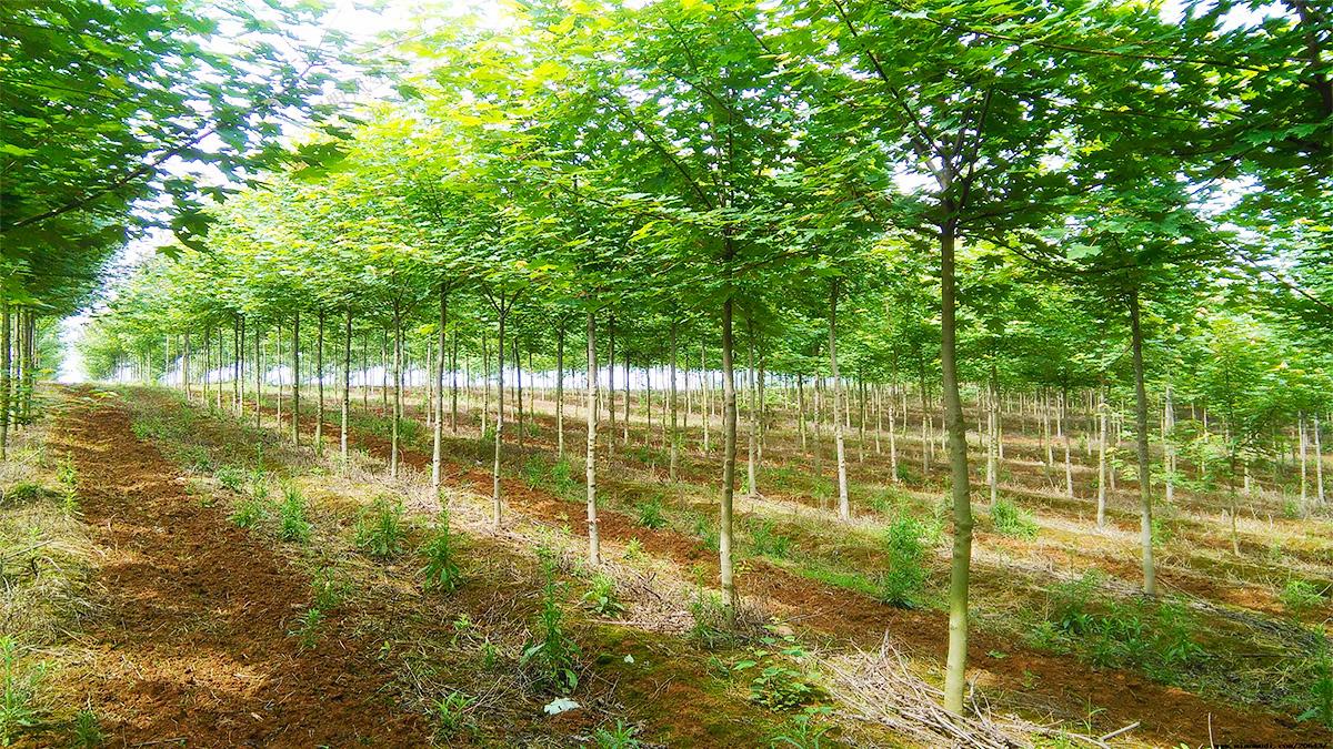 5乔木种植基地
