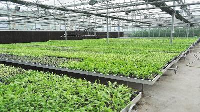 育苗基地温室