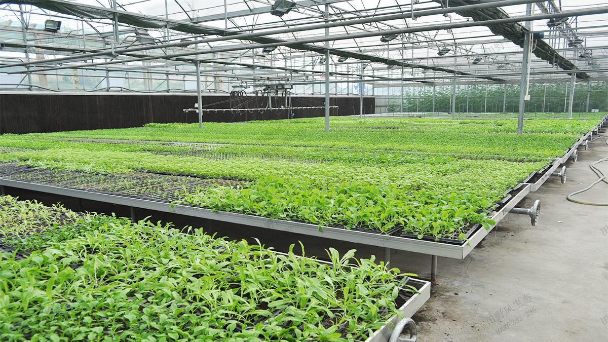 10育苗基地温室