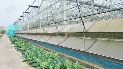 育苗基地温室大棚