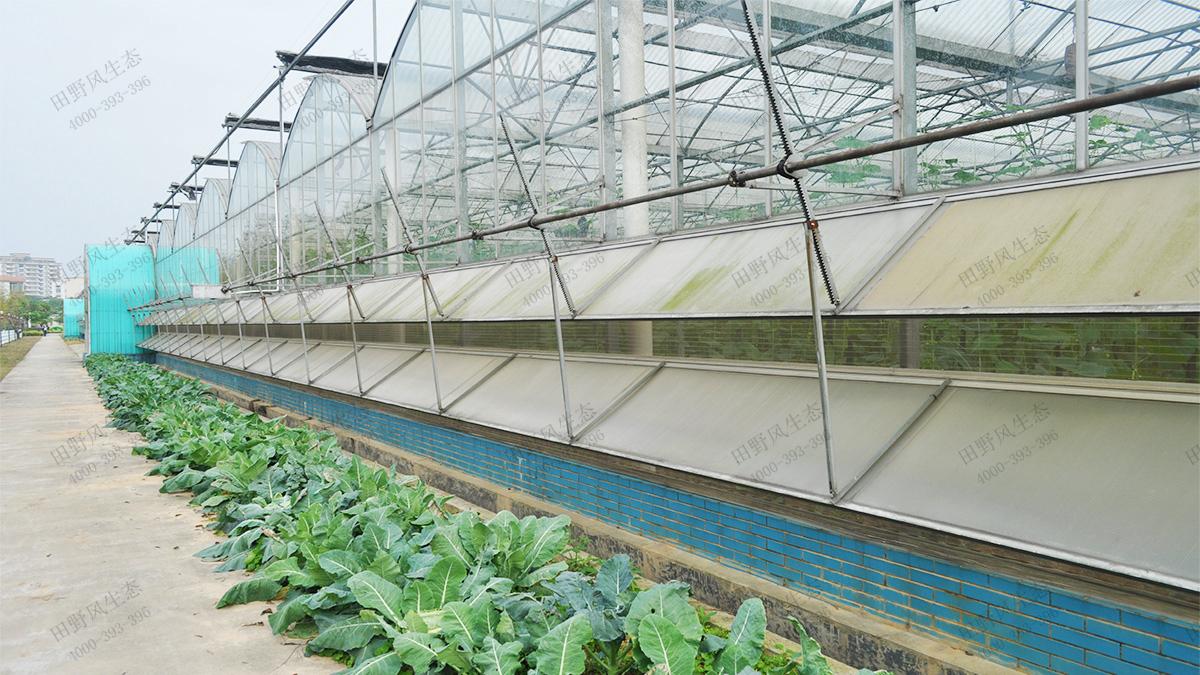 11育苗基地温室大棚