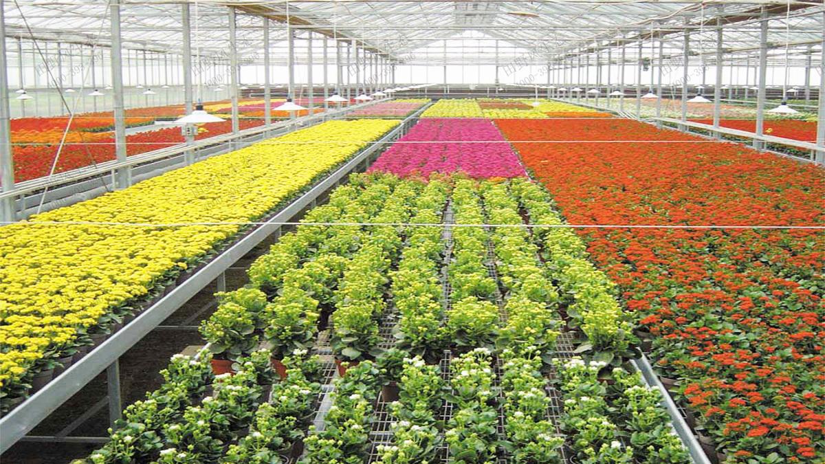 12时花种植生产基地温室