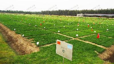 草种试种实验基地