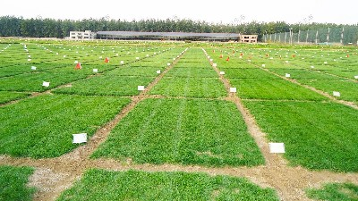 草种试种实验基地培植确保芽率