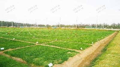 实地培植确保芽率