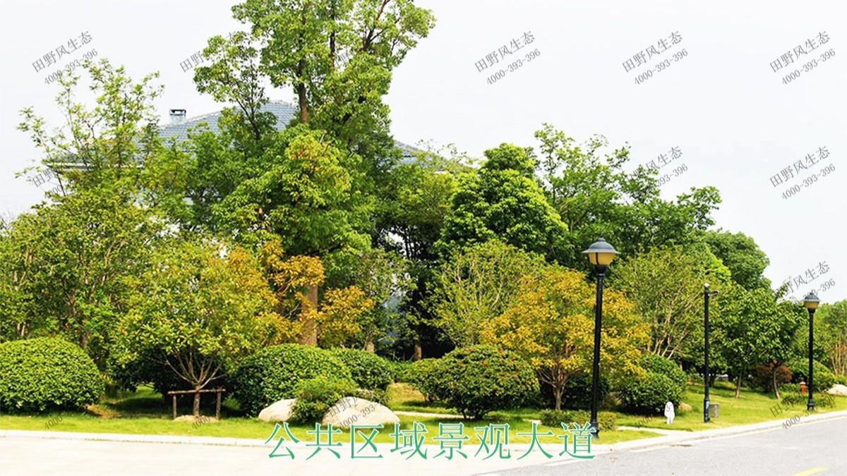 广州海珠广场园林绿化工程
