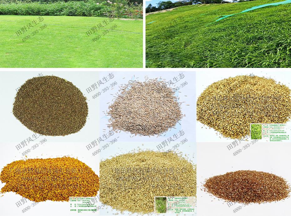 生态复绿种子