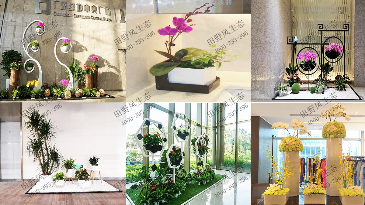 花卉租赁服务