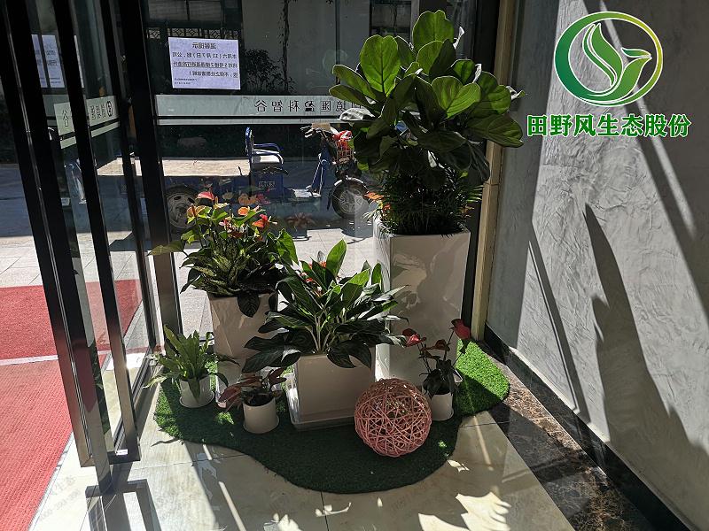公司租绿植,公司花卉租赁