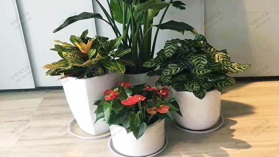 单位租绿,单位花卉租赁