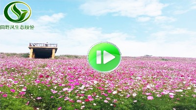 景区公园花海视频
