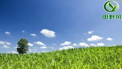 边坡绿化草坪种植详解
