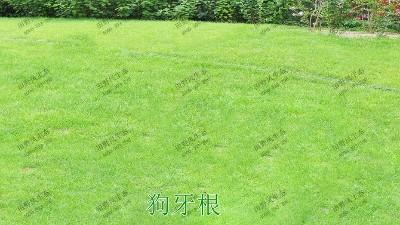 边坡绿化用的是什么草种?