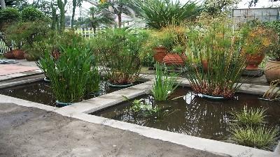 水池绿景组合景观