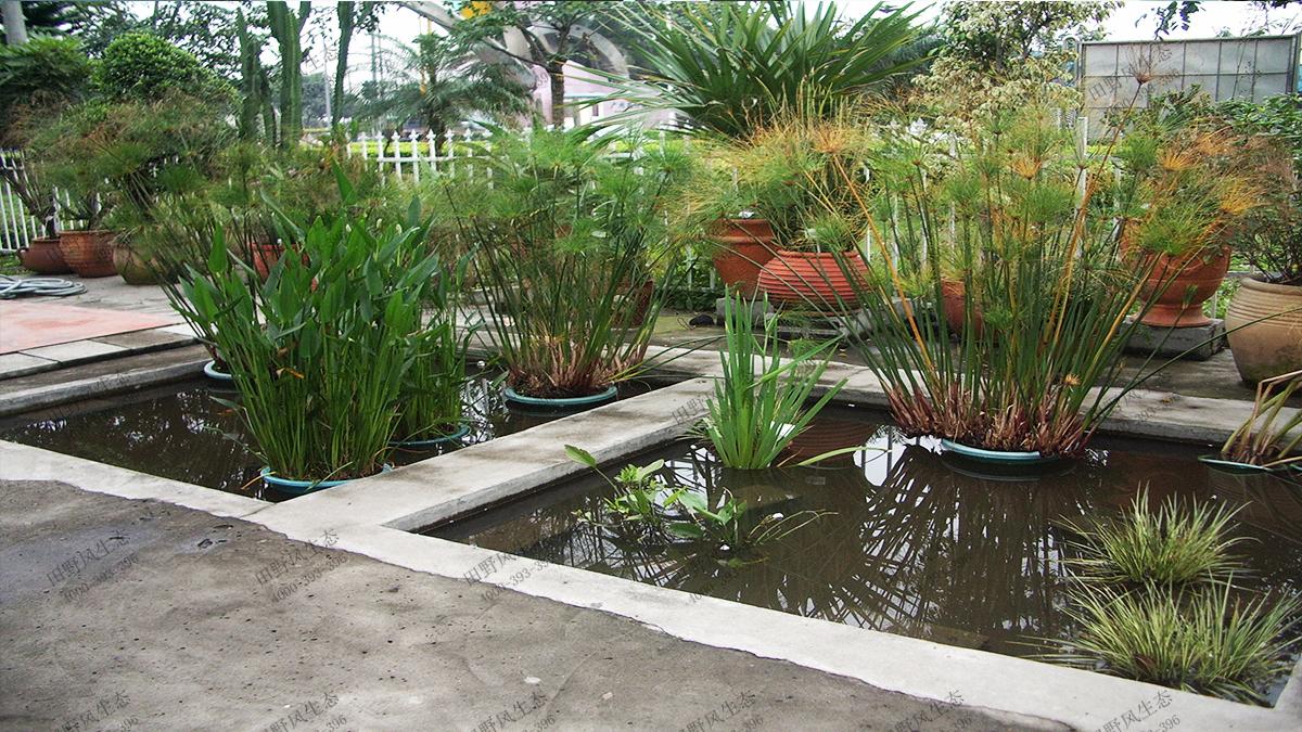 9水池绿景组合景观