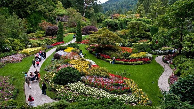 园林绿化景观植物