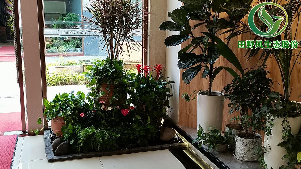 盆栽花卉植物租赁,绿植租摆