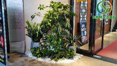 广州室内盆栽花卉植物租赁服务流程