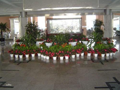 医院植物租摆