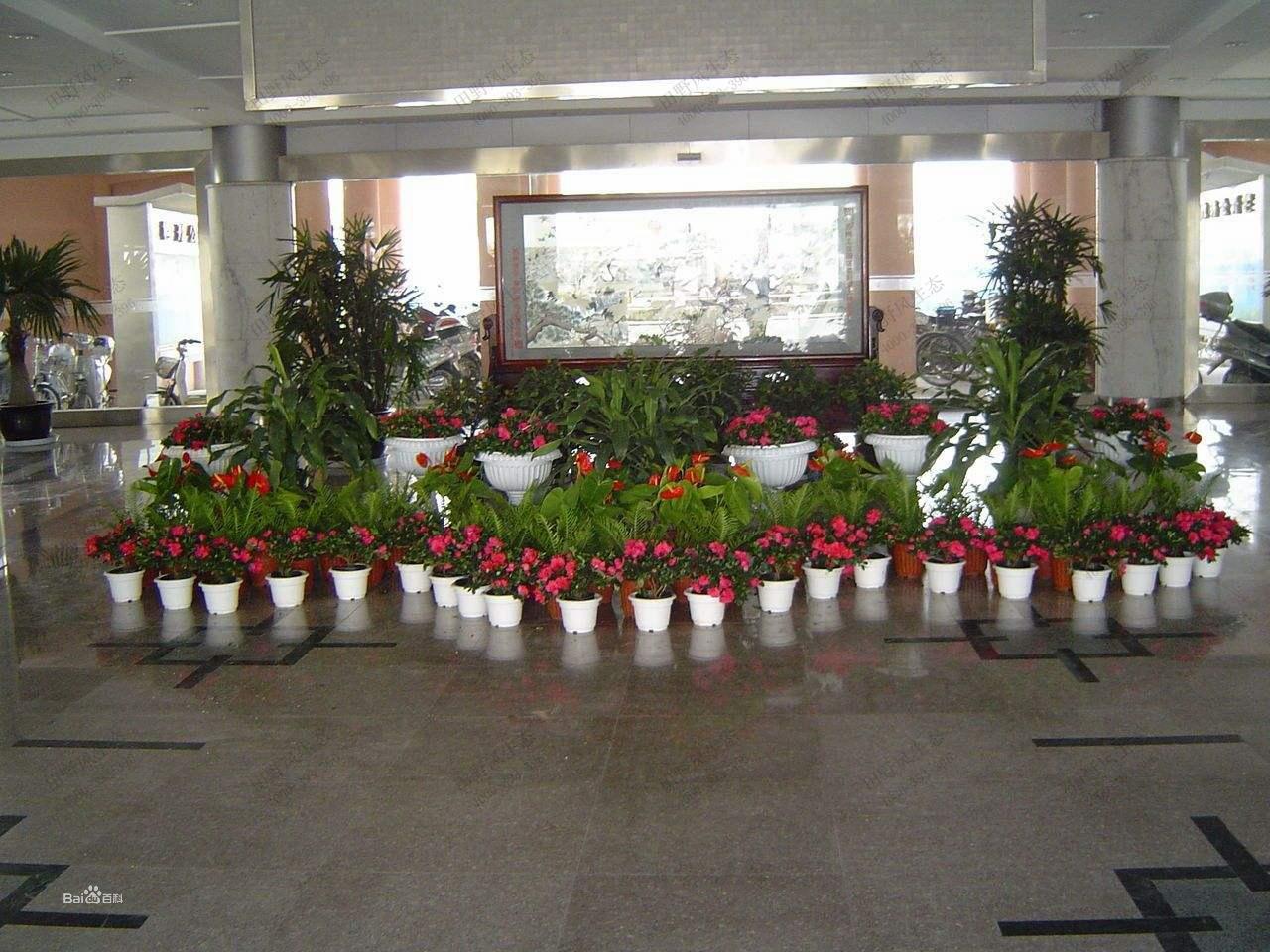 植物租摆,绿植租赁