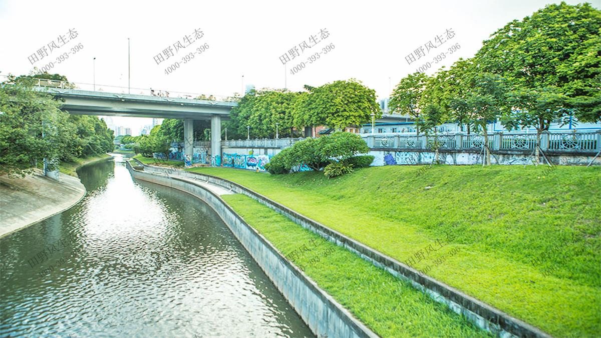 水域生态修复