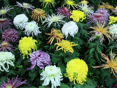 秋高气爽,你的花卉花种子种植名单里怎么可以少了它