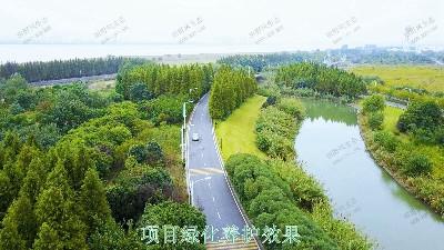广州开创大道市政园林养护效果展示