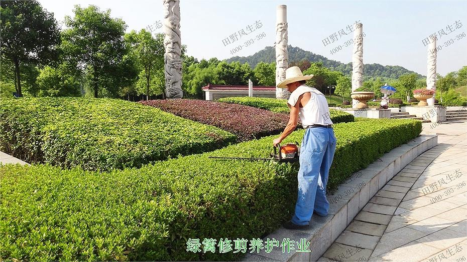 5绿化养护作业施工