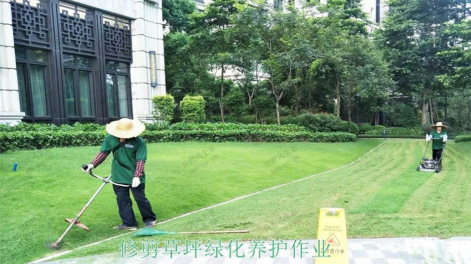 2修剪草坪绿化养护作业