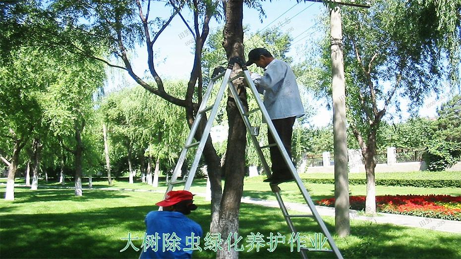 3大树除虫绿化养护作业