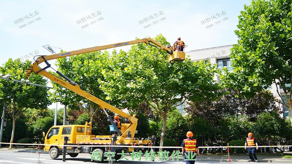 4高空大树修剪作业