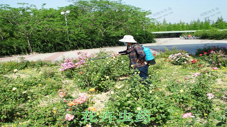 5花卉虫药