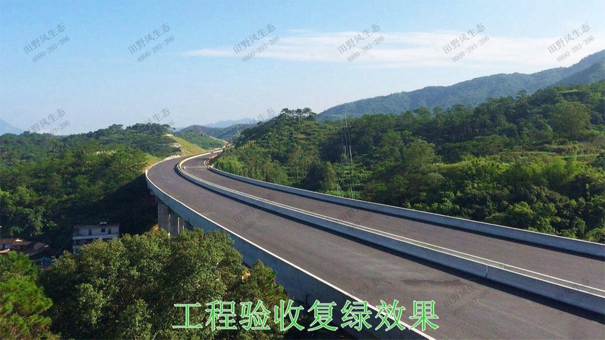 包茂高速茂名段高速公路边坡复绿