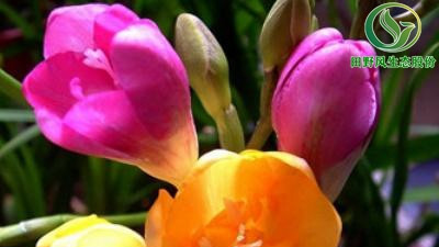 花卉种子怎么种?